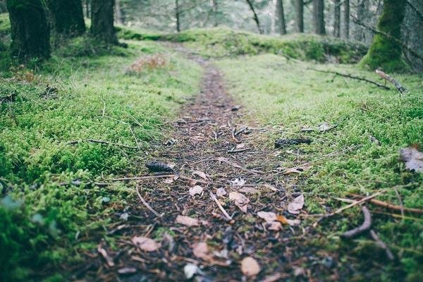 Appalachian Trail Series.4