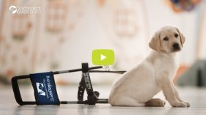 Link to Southeastern Guide Dogs Video