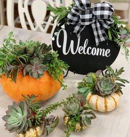 Drop in- Succulent Pumpkin Workshop: Thursday, October 17th  11am-2pm