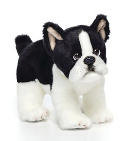Boston Terrier Small