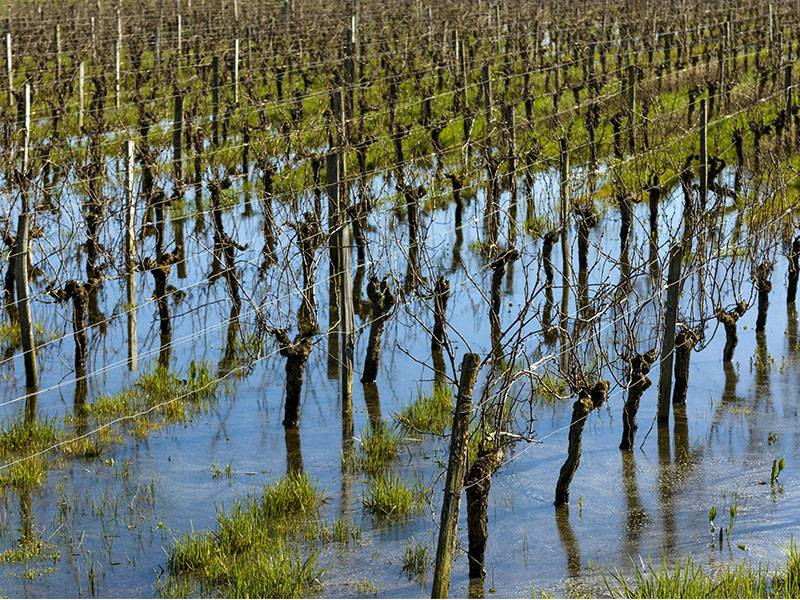 Bordeaux – Drain That Swamp!