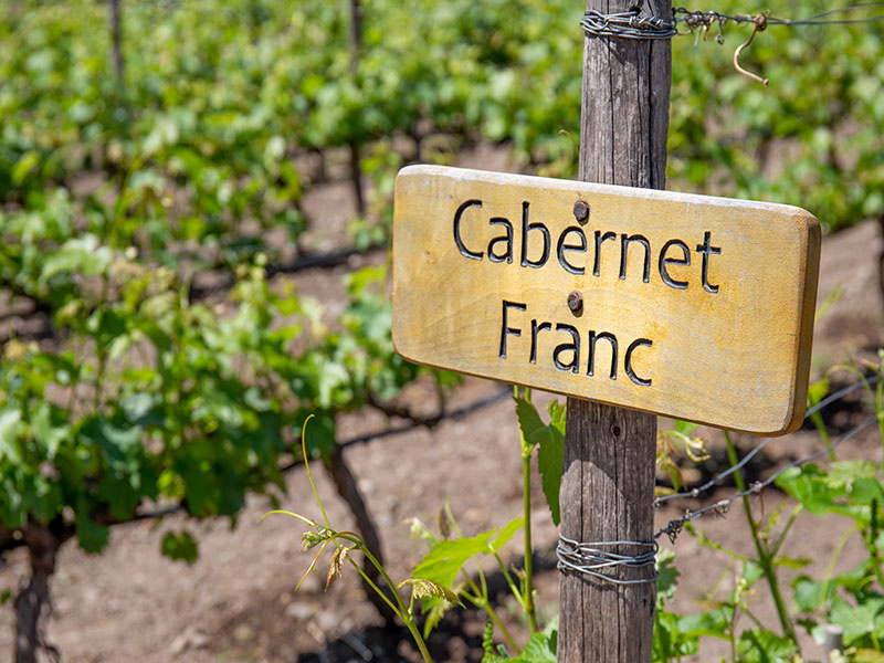 "The ""Noble Father""—Cabernet Franc"