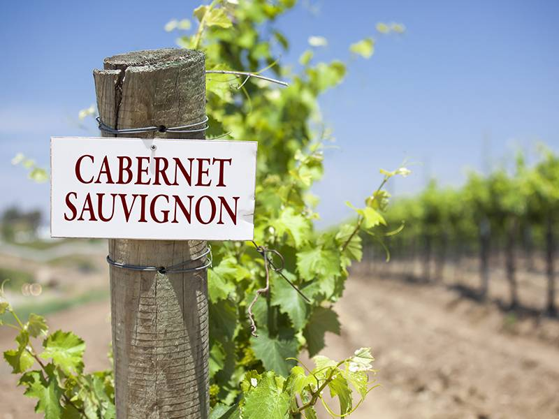 10 Things You May Not Know About Cabernet Sauvignon