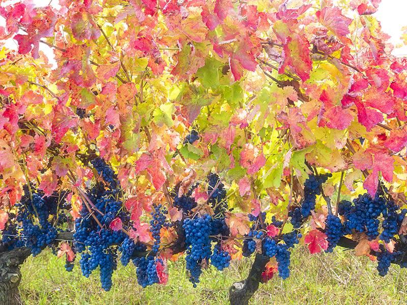 Aglianico: The Perfect Wine for Fall/Winter Dishes