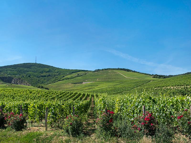 """The World is """"Hungary"""" for Furmint"""