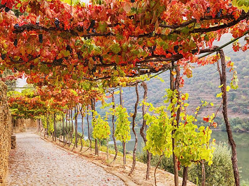 V Facts About Vinho Verde