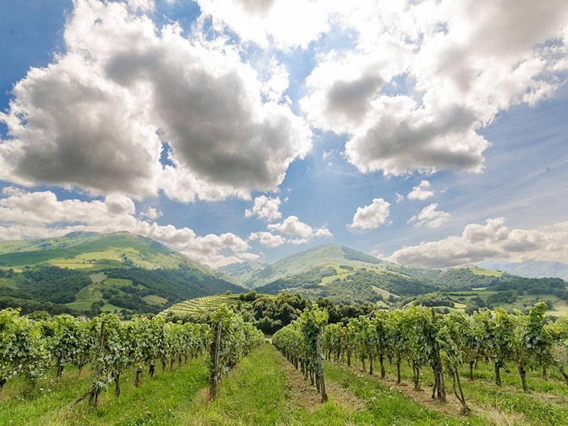 The Wines of Cotes de Gascogne
