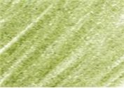 DERWENT DERWENT COLOURSOFT PENCIL LINCOLN GREEN C480