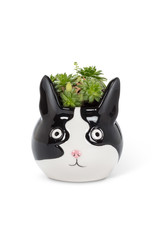 Abbott Abbott-Cat Head Planter-S