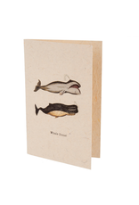 Indaba Trading Inc Whale Done Card