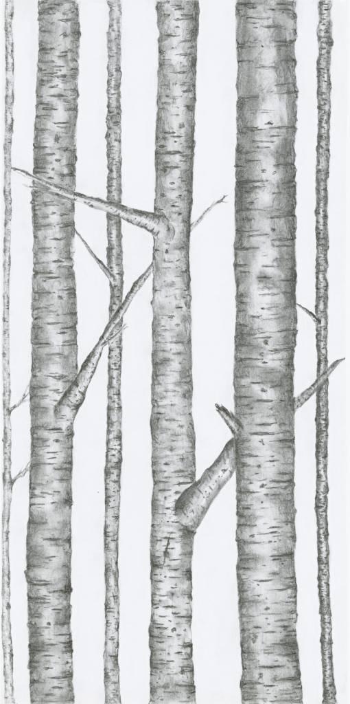 Kayla Walsh Kayla Walsh-Illustrations Series