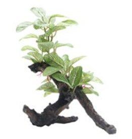 "Fluval Fluval Medium African Shade Leaf on Root - 20 cm (8"")"