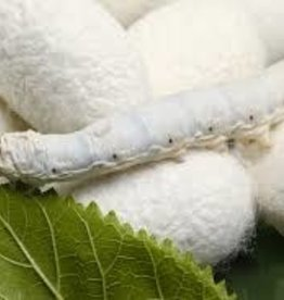 Silkworm Singles