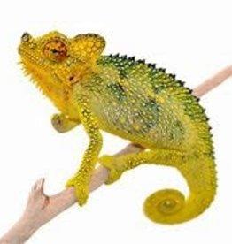 Chameleon - Helmeted