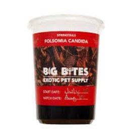 Big Bites Big Bites Springtail Culture