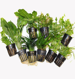 Assorted Potted Plants 1pc