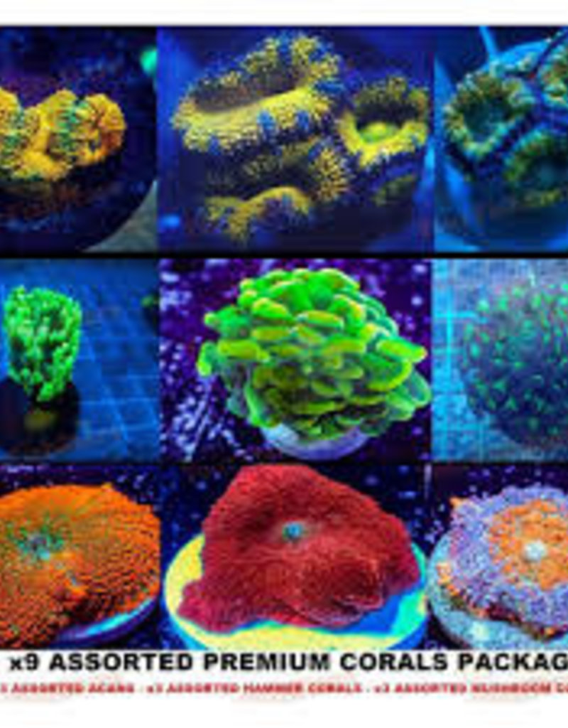 Assorted $50 Coral Frags - Saltwater