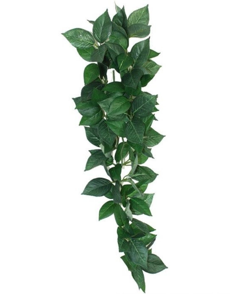 Komodo Komodo Sumatra Hanging Vine 13cm