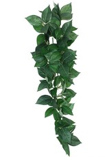 Komodo Komodo Sumatra Hanging Vine 23cm
