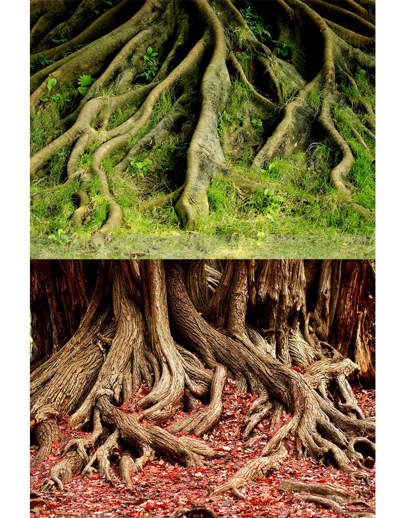 """Amazon Root/Grassy Root Reversible Background - 20"""""""