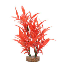 Fluval Fluval Aqualife Plant Scapes Intense Red Hygrophila - 20 cm (8 in)