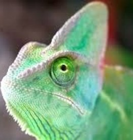Chameleon - Veiled (Super Translucent)