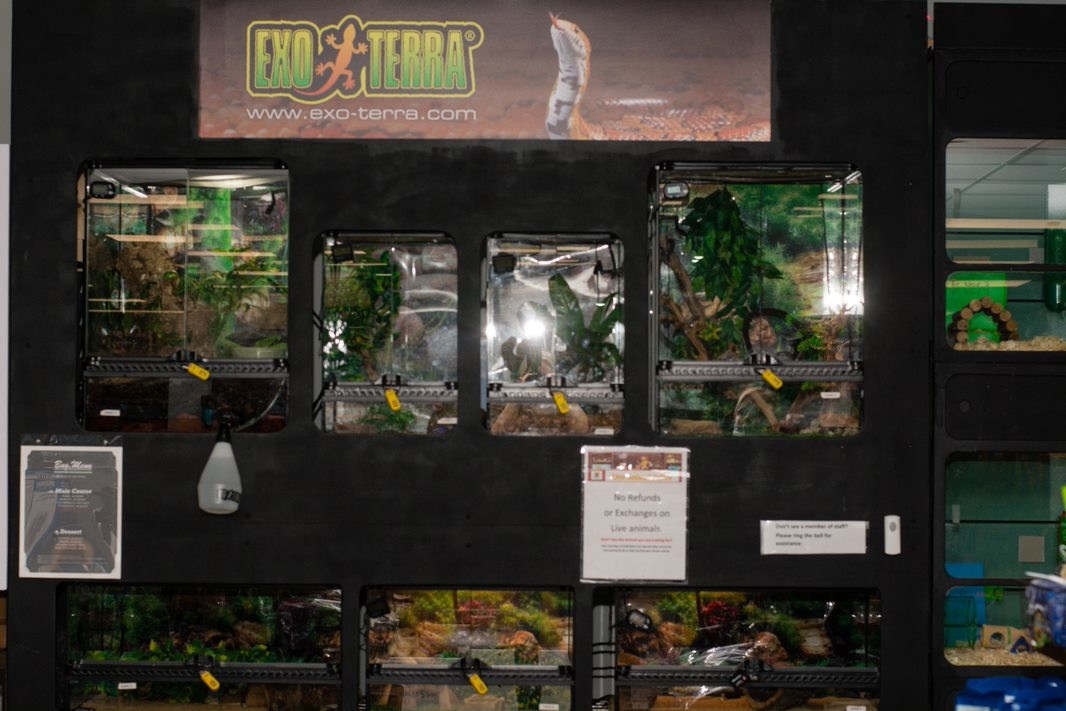 Live Reptile Section