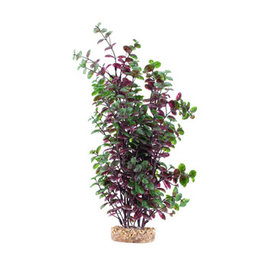 Fluval Fluval Aqualife Plant Scapes Red Bacopa - 35.5 cm (14 in)
