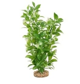 Fluval Fluval Aqualife Plant Scapes White-Tipped Ludwigia - 35.5 cm (14 in)