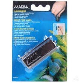 Marina Marina Algae Magnet - Small