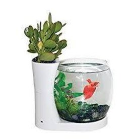 ELIVE Betta Cylinder & Planter White