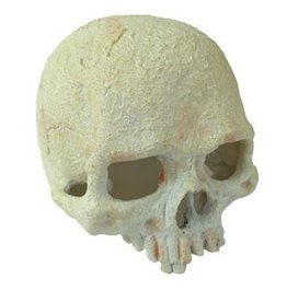 Exo Terra Exo Terra Glow-In-The-Dark Hide Out - Glow Skull