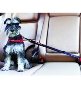 EzyDog EZYDOG Click Adjustable Car Seatbelt