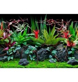 "Marina Marina Double Sided Aquarium Background - Jungle Flora/Red Lace - 30 x 60 cm (12"" x 24"")"