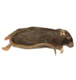 Rats XLarge frozen Feeders
