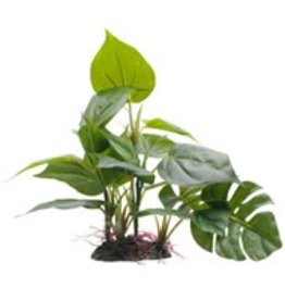 "Fluval Fluval Decorative Plants, Anubias, 20 cm (8"") with base"