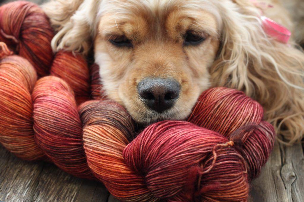 Dream in Color Jilly, Lafayette