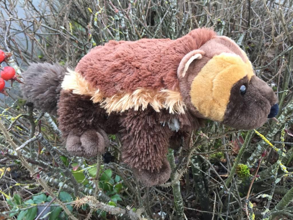 Stuffed animal wolverine