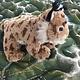 Stuffed animal lynx