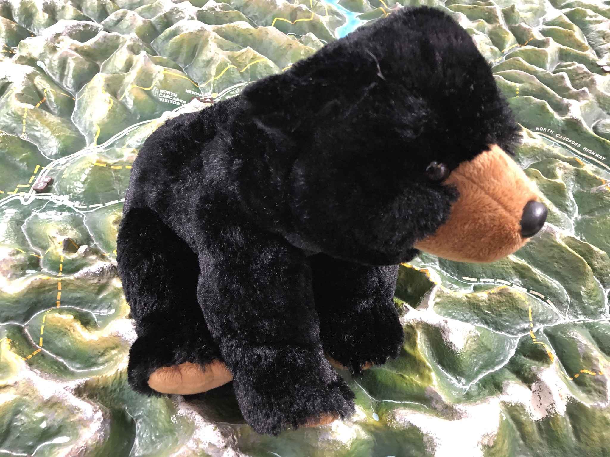 Stuffed animal bear