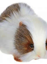 """Guinea Pig 9"""""""