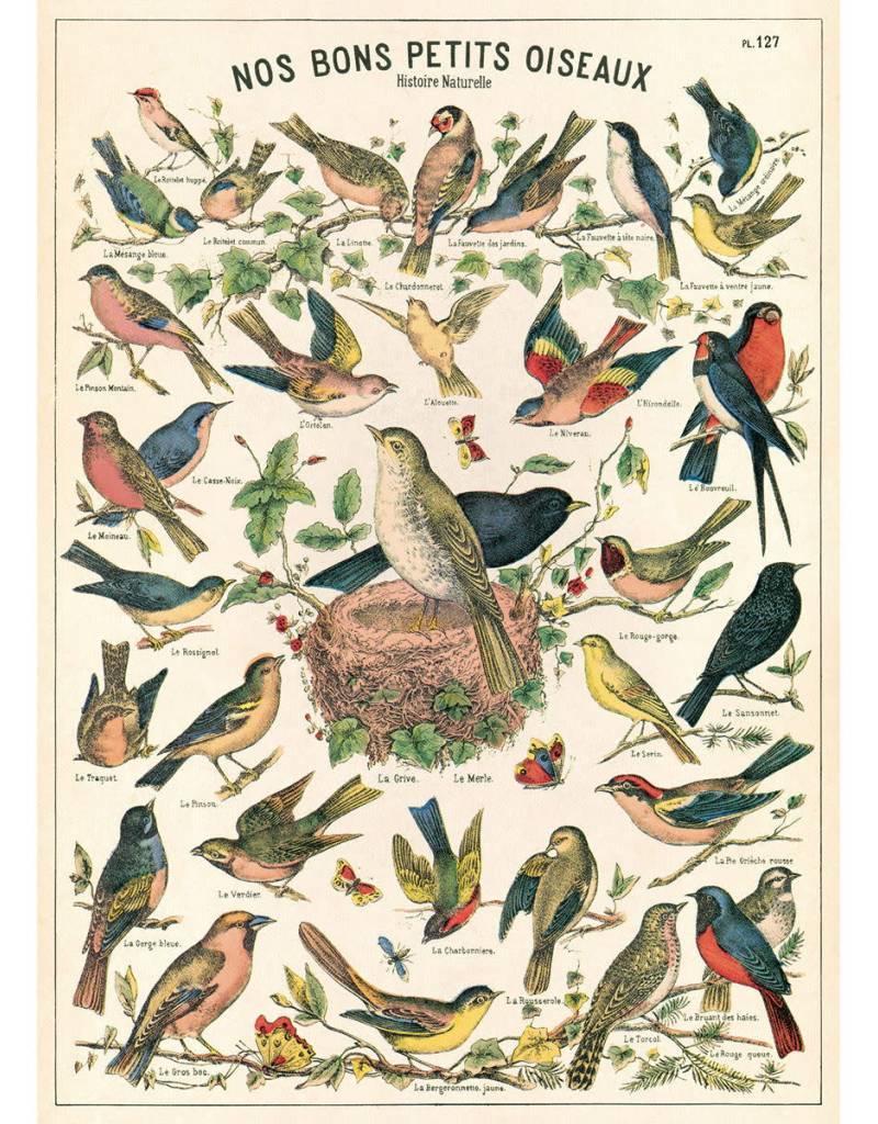 Cavallini Birds Chart