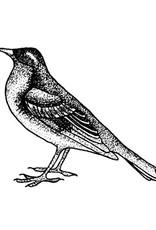 Tattly Songbird Tattoo Set of 2