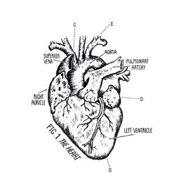 Tattly Heart Chart Tattoo Set of 2