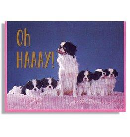 Smitten Kitten Oh Haaaaay! Greeting Card