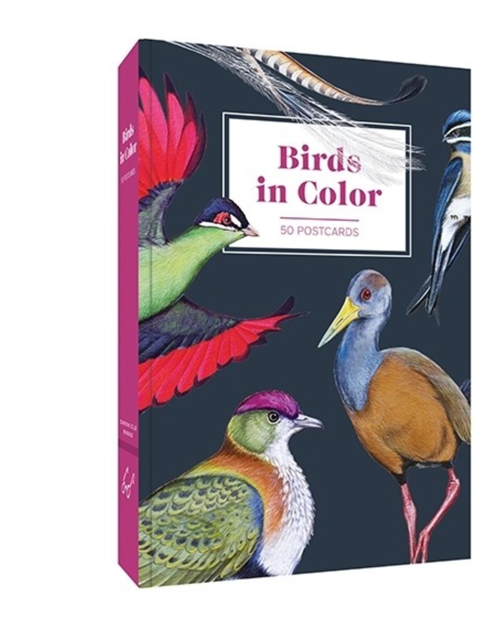 Birds in Color Postcard Set