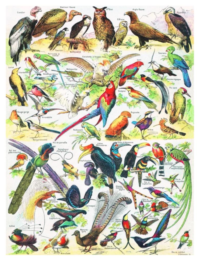 New York Puzzle Company Birds (Oiseaux) 1000 Piece Puzzle