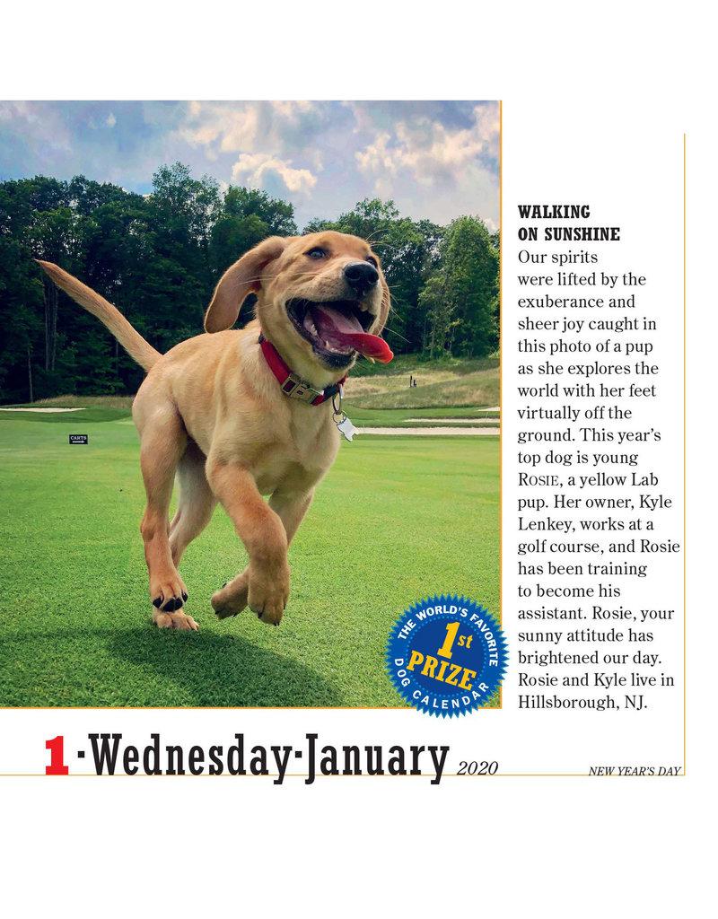 Workman Publishing Group Dogs Pad Calendar 2020