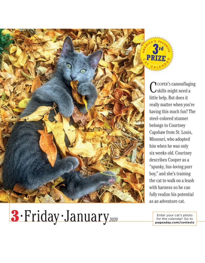 Workman Publishing Group Cats Pad Calendar 2020