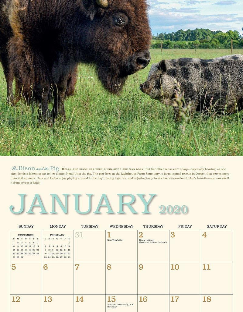 Workman Publishing Group Unlikely Friendships Wall Calendar 2020